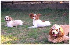 ライトマン京都警察犬訓練所では